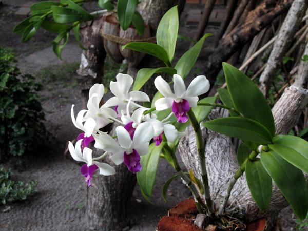Фото тропических орхидей