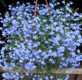 Многолетние цветы название фото