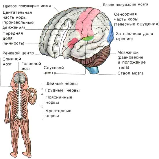 http://www.bankreceptov.ru/pic/medsovet-017.jpg
