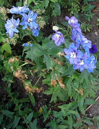 цветы не вызывающие аллергии