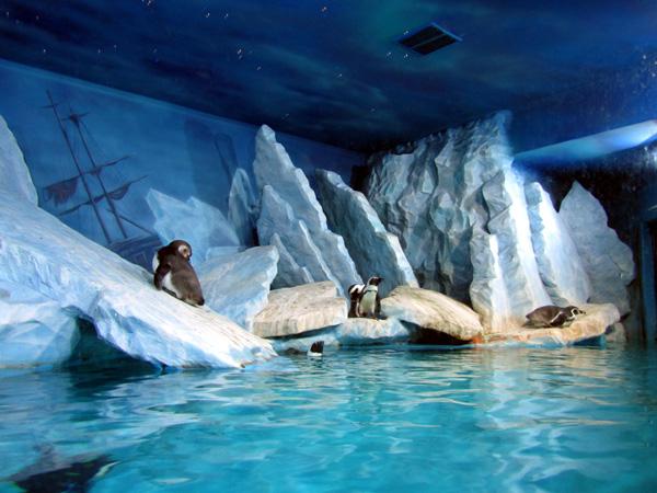 пингвинник. Фото