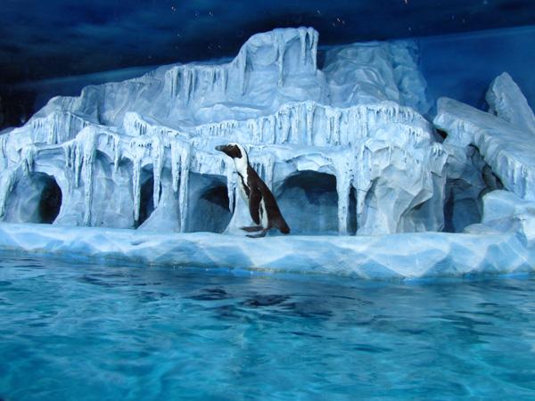 Пингвин. Фото