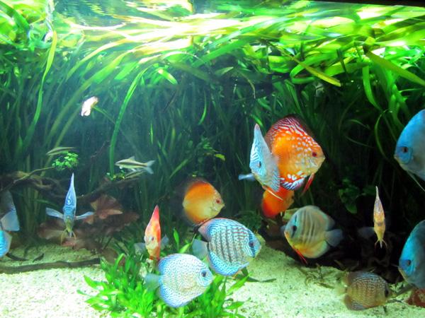 аквариум. Фото