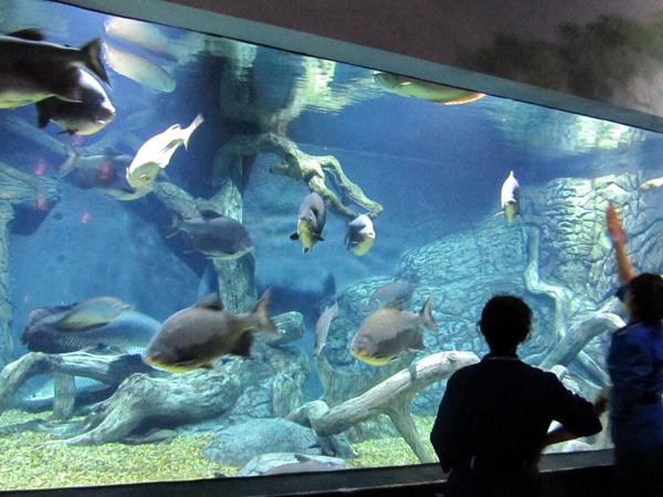 Большие рыбы. Фото