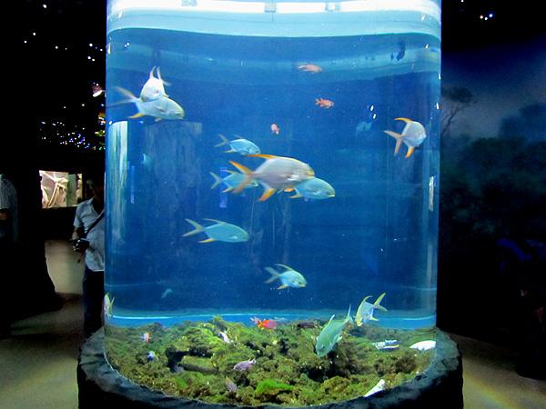 рыбки. Фото