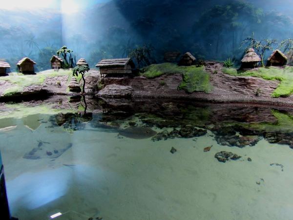 бассейн со скатами. Фото