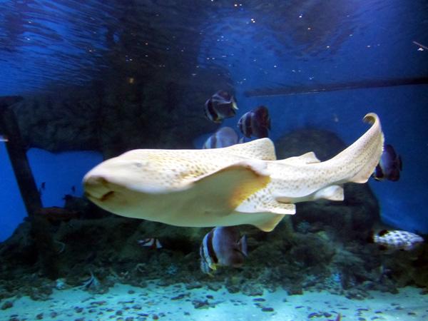 аквариум с акулами. Фото