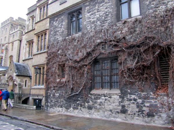 стена с плюющем, фото