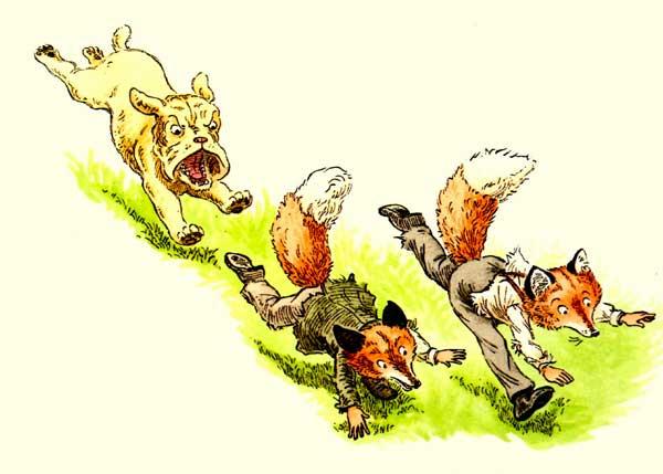 лисы бегут от бульдога, фото