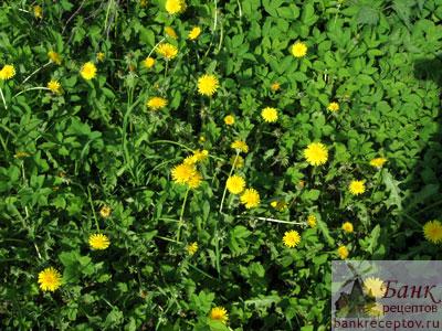 Растения на подставках