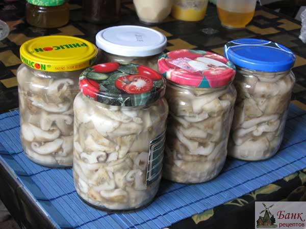 белые грузди соленые рецепт с фото
