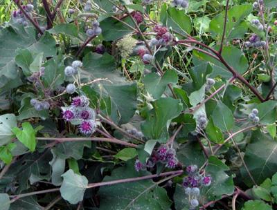 Оформление шпалер для винограда