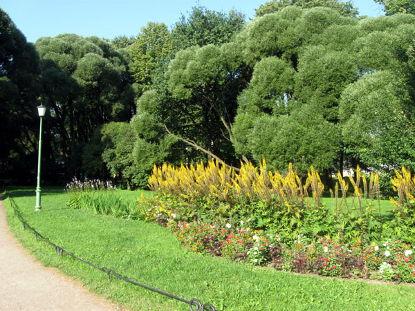 Деревья и кустарники санкт петербурга